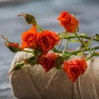 Роза кустовая