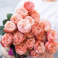 Роза Kahala